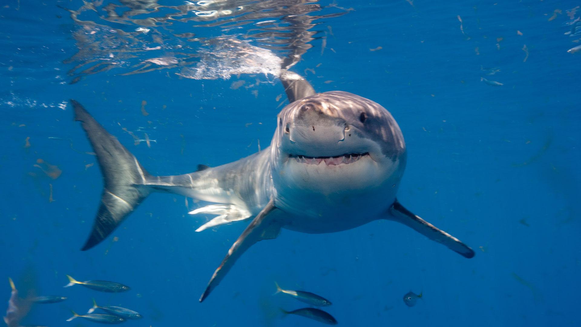 Mujer saca del mar a un gran tibur n con una simple ca a for Where are the fish biting near me