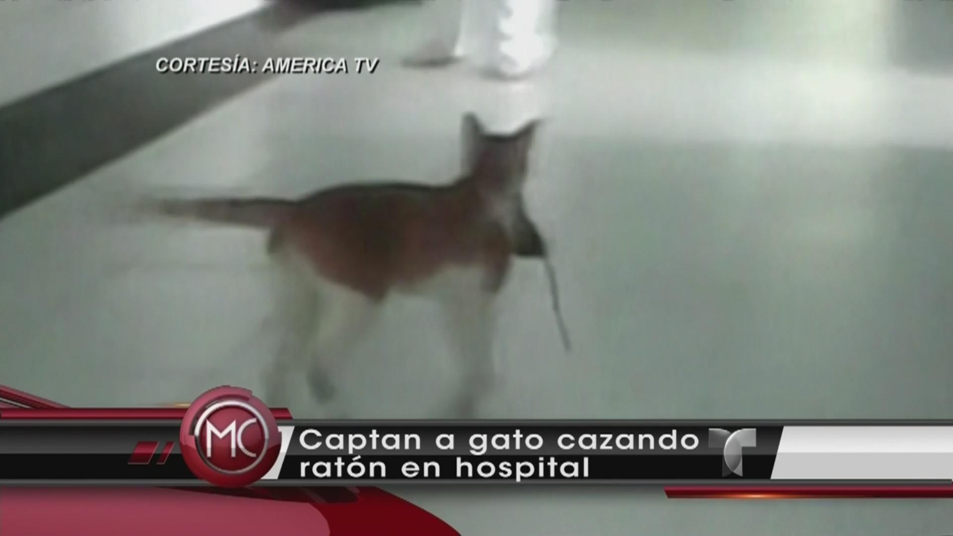 Como Cazar Un Raton. Elegant Como Cazar Un Raton With Como Cazar Un ...