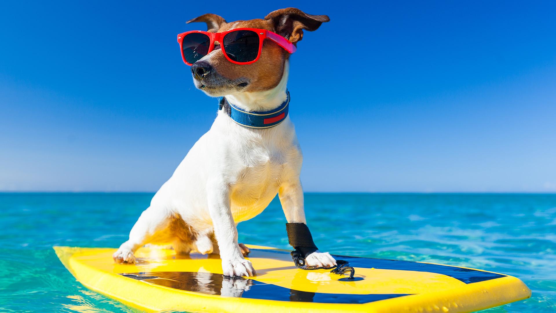 Apps y sitios web para planear tus vacaciones taringa - Paginas para alquilar apartamentos vacaciones ...