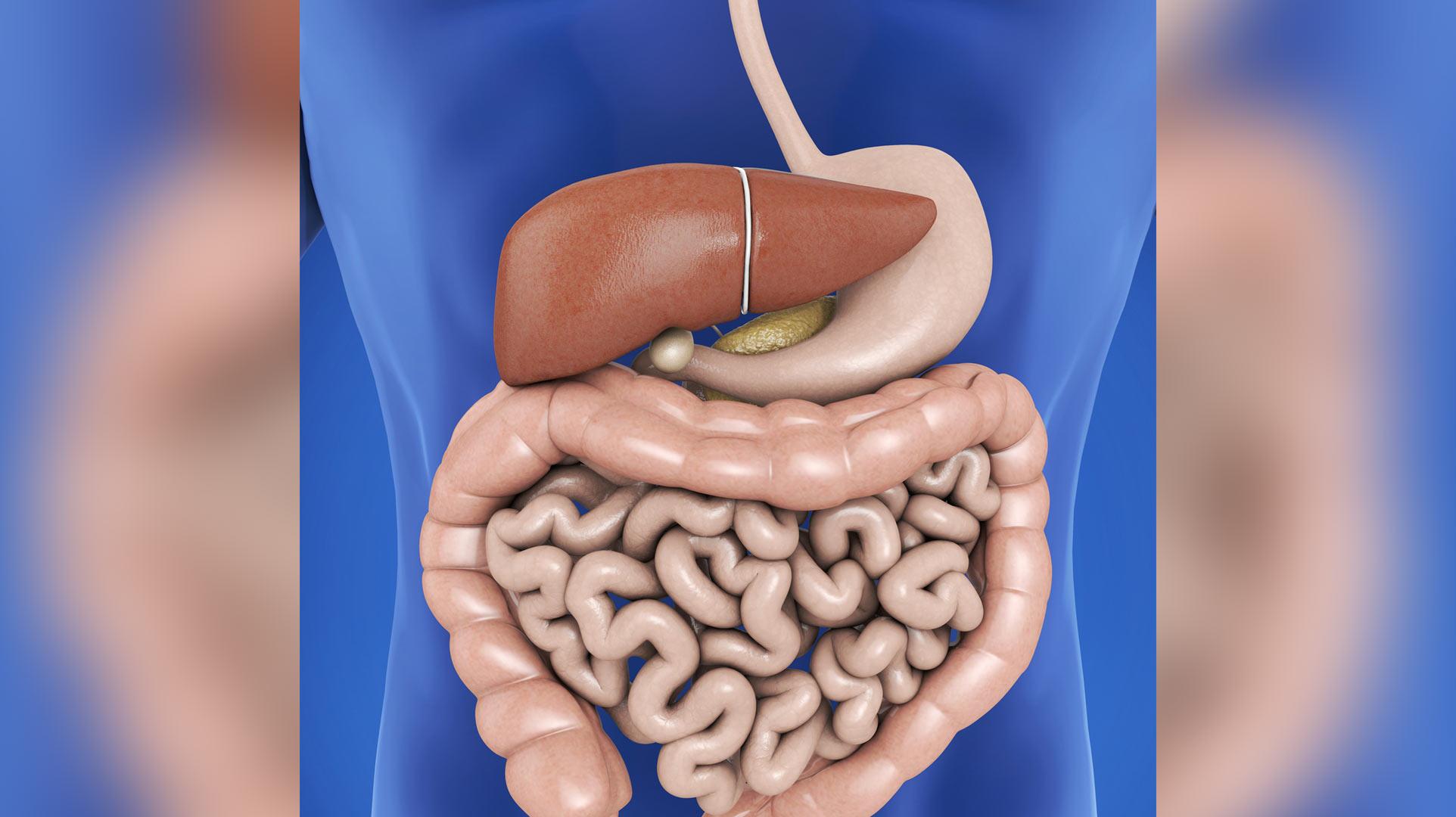 Descubren nuevo órgano del cuerpo humano | Telemundo