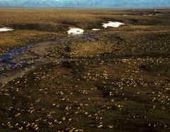 Refugio Nacional de Vida Silvestre del Ártico