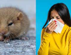 Mujer enferma y roedor