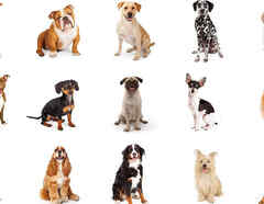 Perros más robados