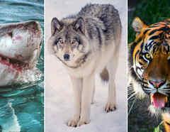 Animales que aparecen en los sueños