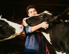 Abrazar vacas