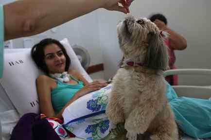 Perros en hospital de Brasil