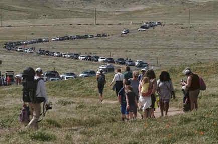 Varias personas caminan por el desierto de California para ver las flores silvestres que han brotado este año en Lancaster, California