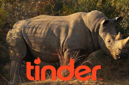 Rinoceronte blanco se une a Tinder.