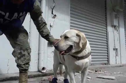 Frida, la perra que ha salvado muchas vidas en México