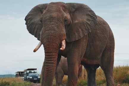 Elefante aplasta a turista
