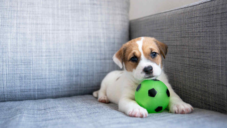 perro con pelota en el sofa
