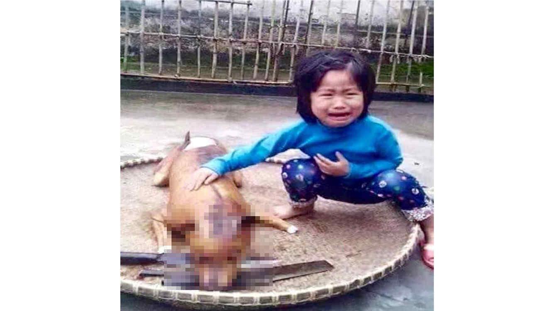 Perro muerto y asado al lado de niña llorando