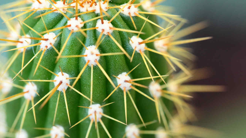 Cactus visto de cerca