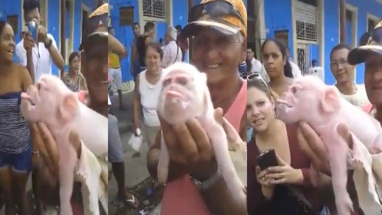 Cerdo con Cara de Cuba nace en Cuba