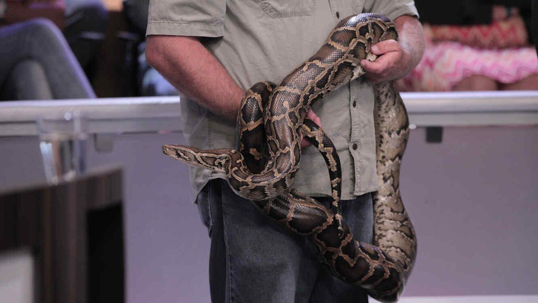 Hombre tiene sexo con serpiente