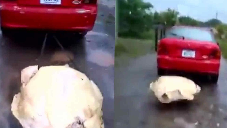 Amarran y arrastran a una tortuga con un auto en Costa Rica