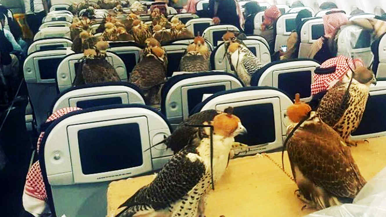 Halcones de príncipe árabe en avión