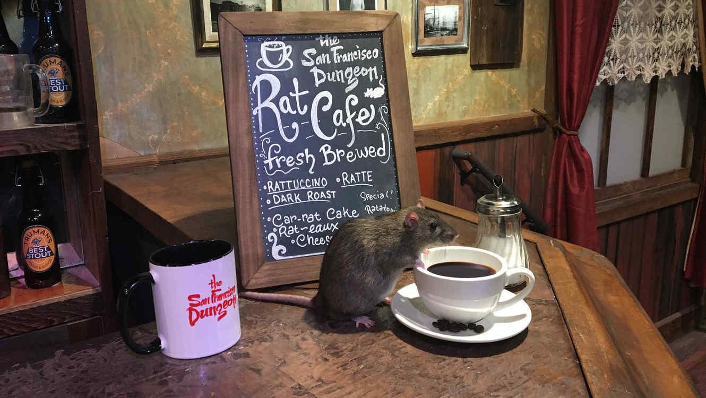 Bebe café rodeado de ratas.