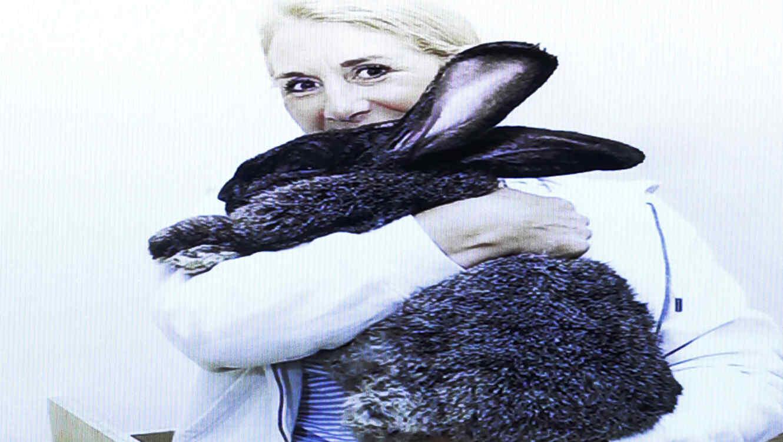 Demandan a línea aérea por la muerte de un conejo gigante llamado Simón