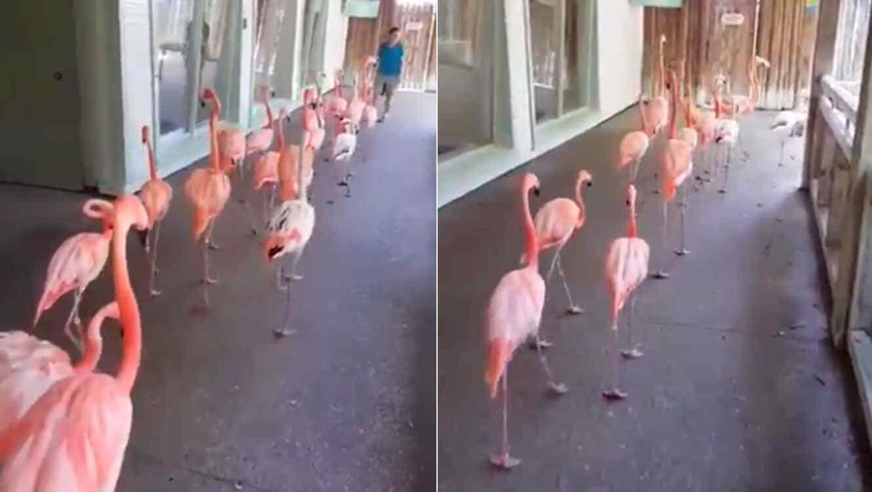 Flamencos marchando