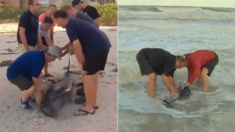 Reportero ayuda a delfines encallados