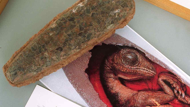 En China albañiles descubrieron 43 huevos de dinosaurios fosilizados
