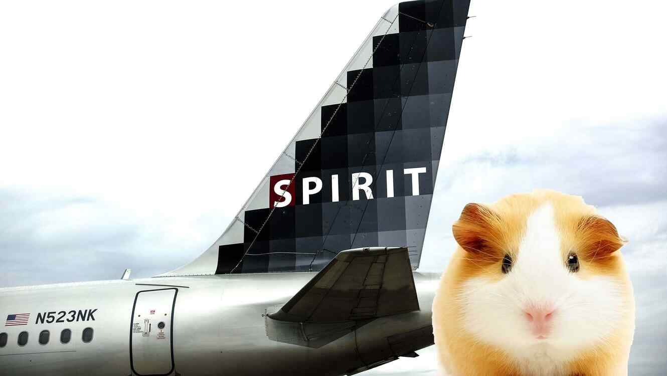 Spirit Airlines incidente con hamster