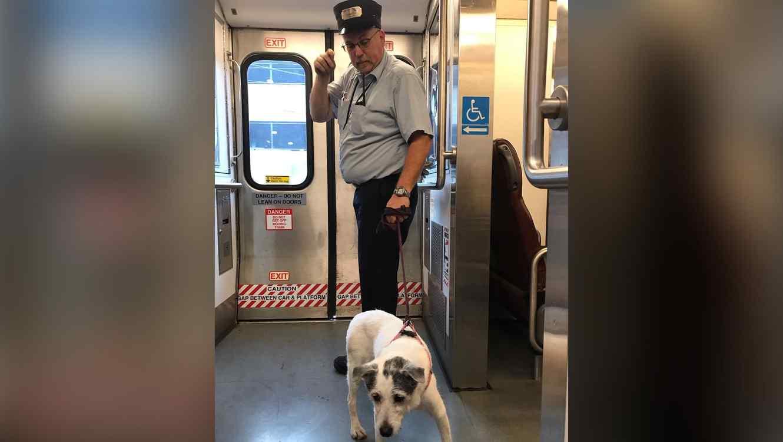 Perro perdido es salvado por conductor de tren