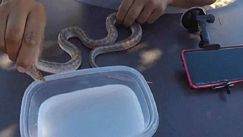 serpiente congelada
