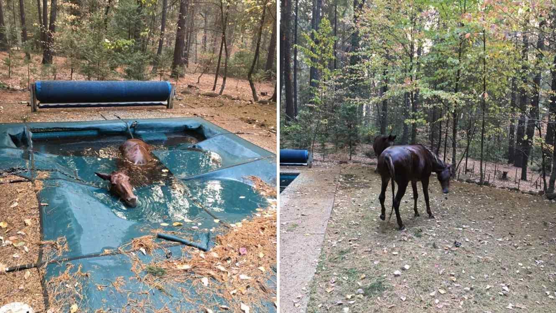 Jeff Hill, residente de Paradise (California) encontró al animal y la ayudó a salir. Se desconoce cuánto tiempo llevaba ahí.