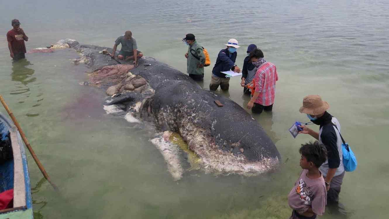 Residentes de una aldea cercana acudieron a deshacerse del cuerpo del animal