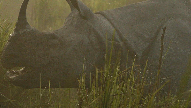 Un rinoceronte con un cuerno