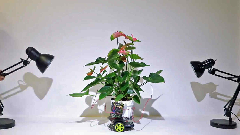 planta robot