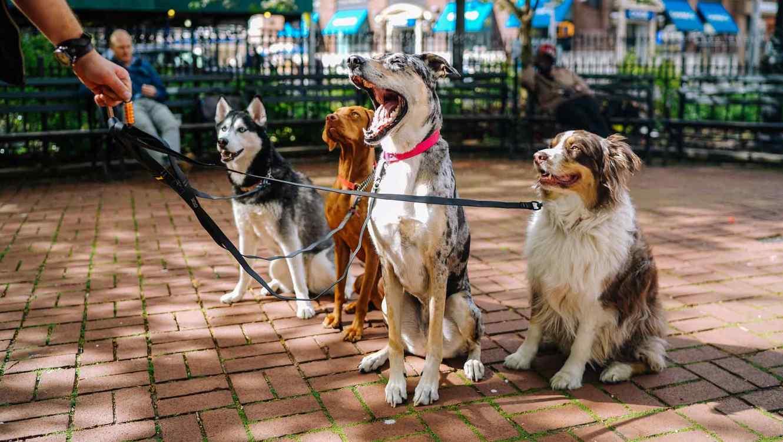 Así, cuatro perros esperan a su dueño internado