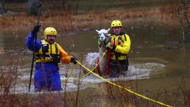 El Cuerpo de Bomberos y Rescate del Condado de Howard evita que una llama se ahogue el domingo en Mink Hollow, Maryland.
