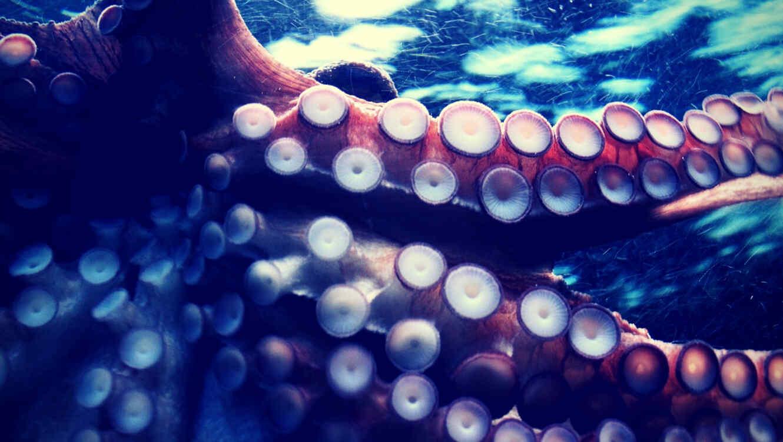 Niña regala conchas marinas a su padre sin saber que ocultaban peligro