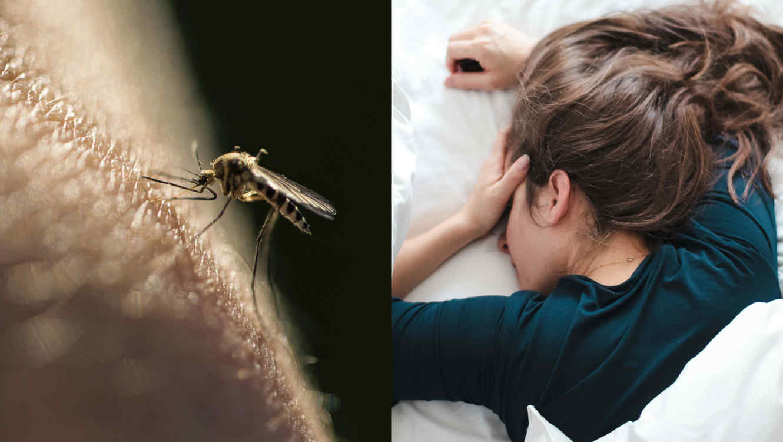 enfermedad viral transmitida por mosquitos
