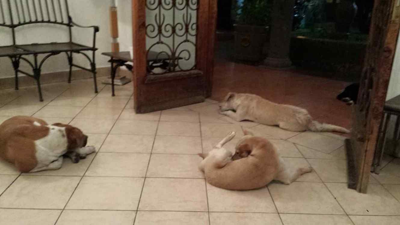 Perros callejeros esperan en puerta de velorio