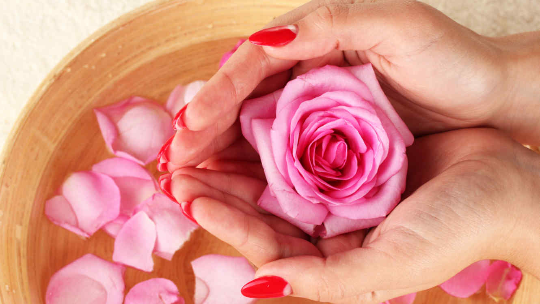Image result for rosas