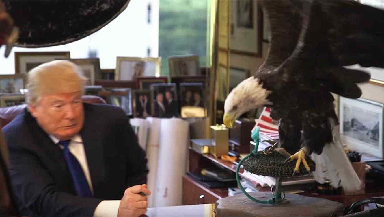 águila ataca a Donald Trump