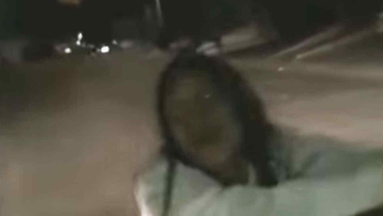 Mujer poseída por el demonio camina por las calles de Culiacan