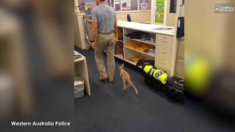 canguro mascota de cuartel de policia