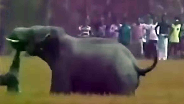 Elefante ataca a un hombre hasta matarlo en la india