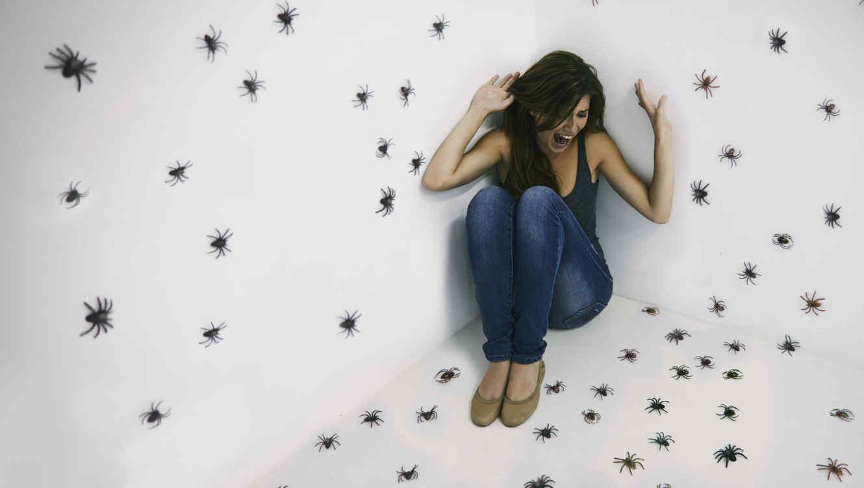 Cómo deshacerse de las arañas en la casa