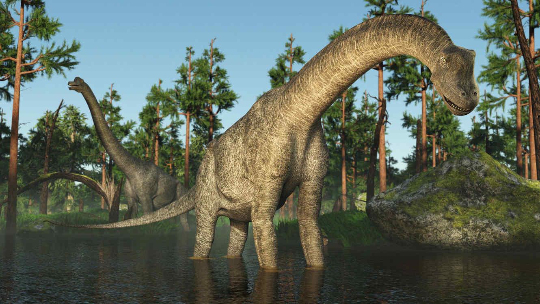 Conoce más sobre cómo eran los dinosaurios. Su color ¡decía mucho ...