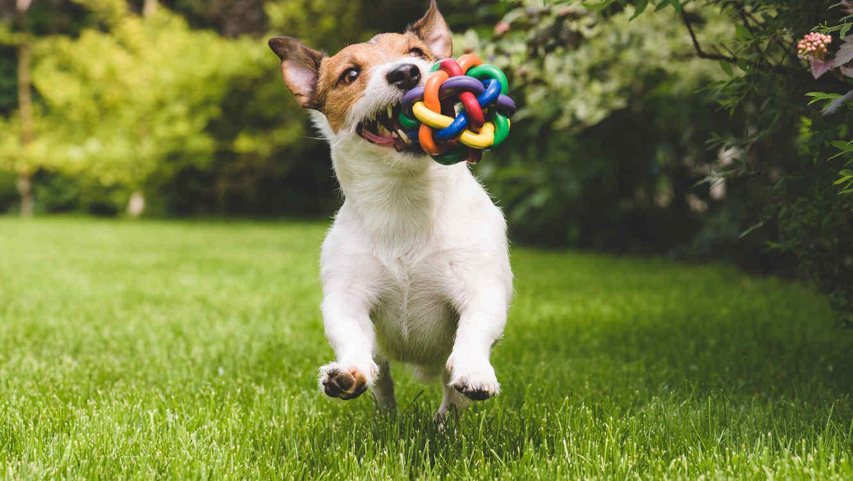 Resultado de imagen de perro parque