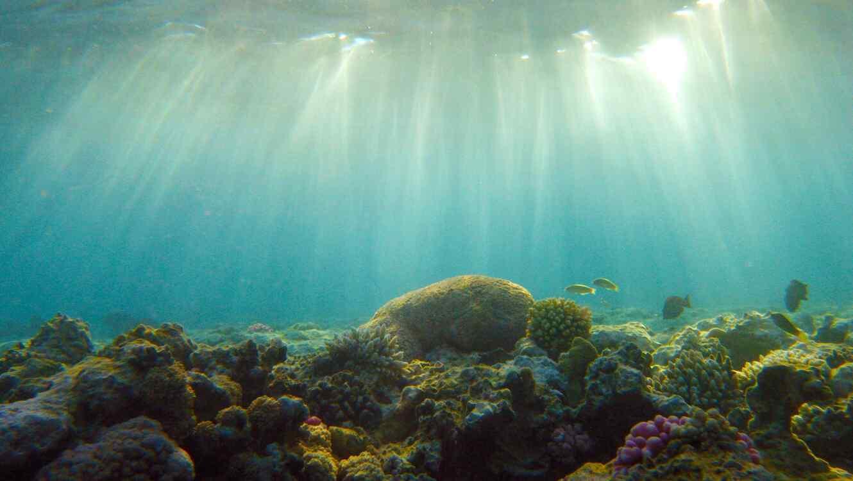 Qu les ocurre a los animales marinos durante los huracanes telemundo - Fotos fondo del mar ...