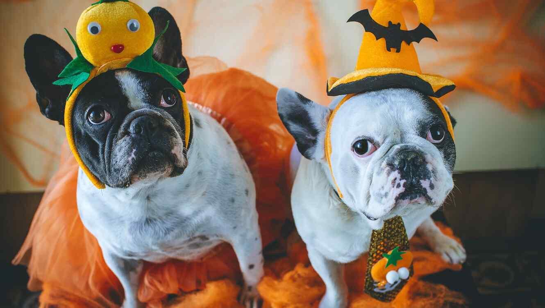 Dos perros con disfraces de Halloween