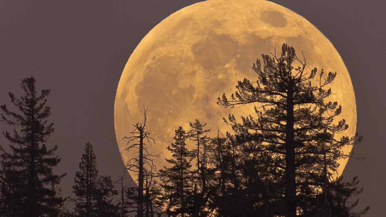 Luna gigante detrás de árboles
