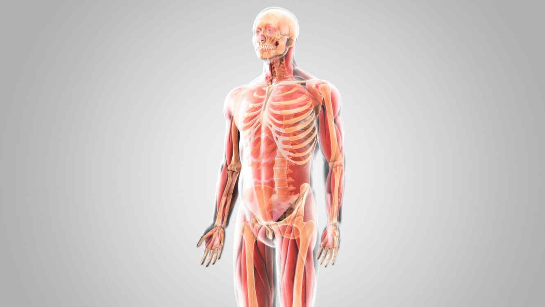 Imagen del cuerpo humano